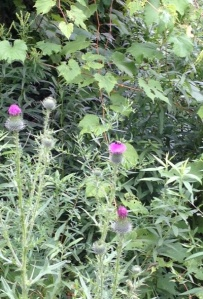 thistles&bee
